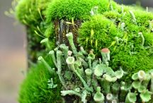 Moss, Lichen and Shrooms oh my!