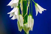 Цветы (flower)
