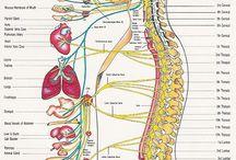 Somatológia