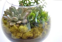 Beautiful Terrariums / by Cecille