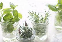 hierbas en agua