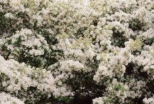Floral Dreams / by FabFitFun
