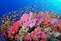 UNder the Sea / Beauty of the world underwater