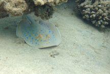 Brayka Bay Reef Resort, Egypt / Duiken op het huisrif