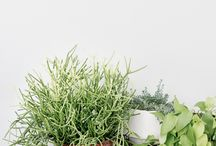 plants / rośliny