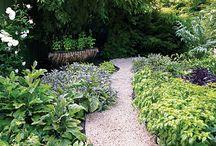 Gardening / by Beverly Graham