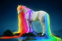 Fantasie paarden / Fantasie