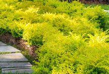 landscape flowerbed
