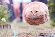 Chats-pitres / Le chat dans toute sa grâce et sa majesté