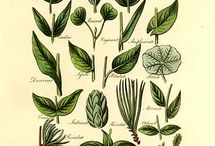 roślinne inspiracje