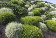 belar garden
