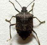 Bug control!