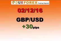 Daily Forex Profits Performance 02/12/16 - Dux Forex