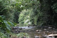Rainforest & Rivers. / Amazing scenery from the Sumatran jungles of Gunung Leuser National Park and beyond.