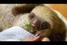 Best Of Cute Baby Animals On Youtube Compilation