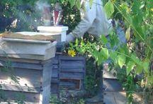 Bee keeping / by Kim Burnham