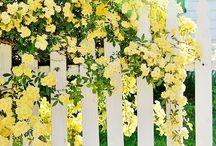 Sunflower cottage / by Bonnie Devlin