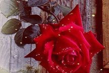 fleur des Etoiles!