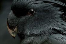 I pappagalli di Enza