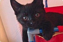 Koťata  Kitten