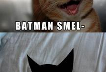 Batman Cat