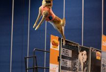 Lumberjack Feud DockDogs® Wild Card Challenge / May 8-10, 2015. The weekend will be an open qualifier offering competitors a wildcard position in the DockDog® World Championships. See high flying DockDogs jump, swim, and catch in this one of a kind competition!   Check out www.lumberjackfeud.com for more information!