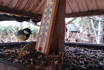Birds in my garden / Birds in my garden....surfin birds