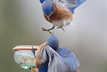Beautiful Birds / The beauty of birds from all over the world!