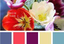tavole di colori