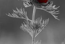 PHOTOS Tout en Gris avec une touche de Rouge