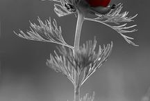 Rosas/Flores/Jardim