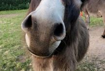 donkeys / chi ama gli asinelli...mi segua!