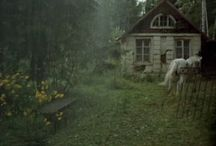 A Little Place in the Woods / by Jeffrey Johnston