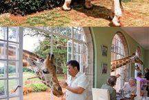 Safari Vacay