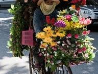 Vietnam / Travel