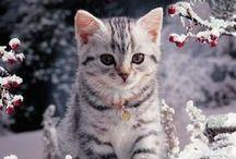 猫好きな押忍晃司