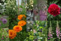 monthly collages of my homegrown flowers  / A collage photograph depicting the flowers that are flowering for each month of the year