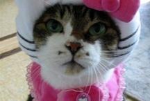 hello kitty madness