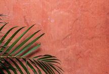 = palm tree =