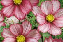 Bloom'n Flowers & Trees... / by Melinda Ingle