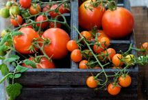 ~ Eat Your Veggies  ~  My Kitchen Garden ~ / (Please pin respectfully) / by Judy Shoup