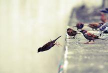 Bird/Oiseau