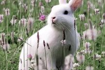 Bunny Rabbits & Cute Animals / Bunny Rabbits & Cute Animals / by Shannon Ogles