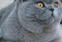 favori kedimmm