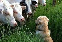 animal funnies