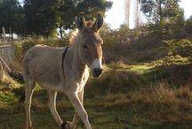 Donkeys / by Nanci Moes