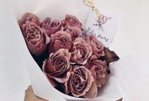 for the love of roses...