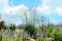 Meadow Gardens and Grasses / A collection of natural movement for the garden.  / by Garden Design