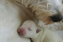 Westies / by Michele Witham