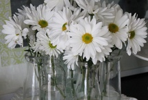 don't run......skip......as if your path ahead is full of daisies. / Am going to plant more daisies in my garden!! They always make me smile!! / by Ilsé McCarthy